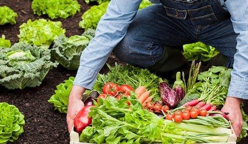 Transformación, comercialización o desarrollo de los productos agrícolas